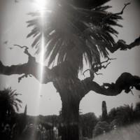 http://zuzannapol.pl/files/gimgs/th-13_Aragon_6.jpg